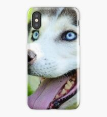 Micky Blue Eyes -Siberian Husky Dog - NZ iPhone Case/Skin