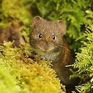 """""""Are you Lichen what you see?"""" by CBoyle"""