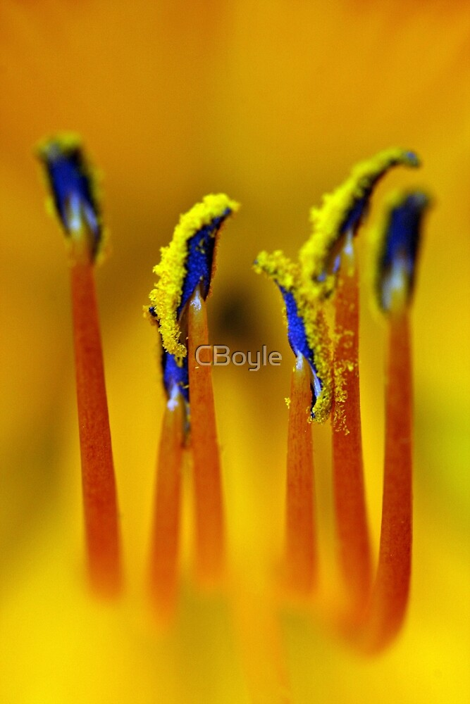 Beauty Within by CBoyle