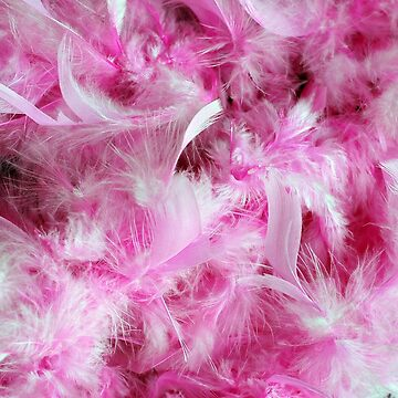 pink feathers by tiffanyo