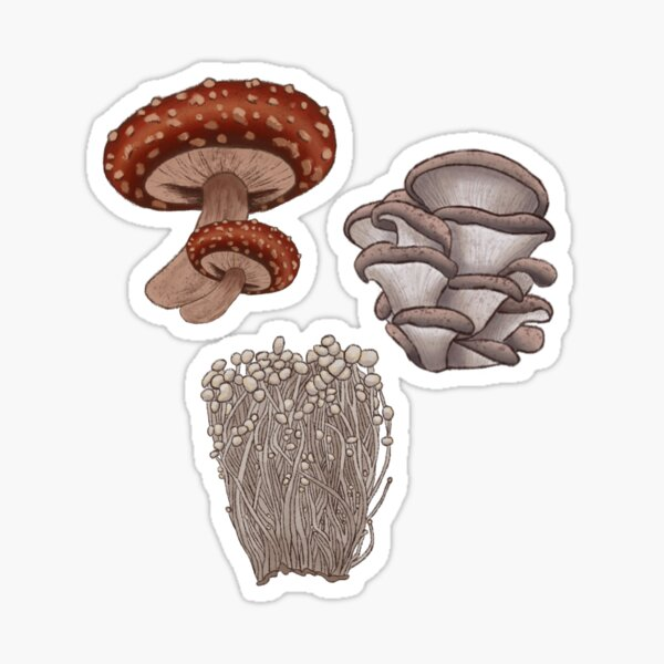 Mushroom Bundle Sticker