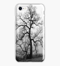a great old tree iPhone Case/Skin