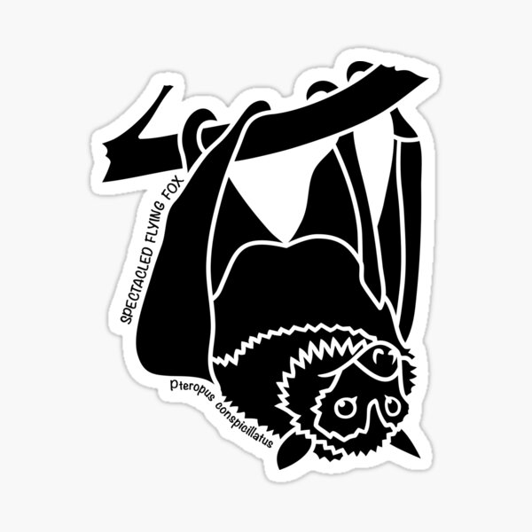 Spectacled Flying Fox. Iconic Australian Animal. Silhouette. Sticker