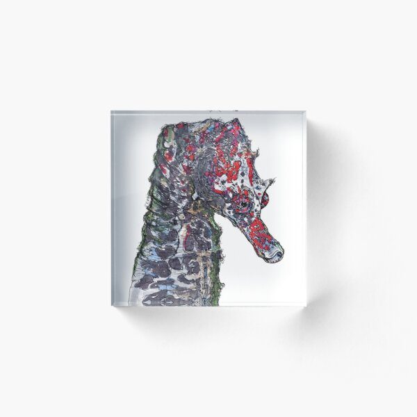 Lady Jayne Seahorse of Manly Nets Acrylic Block