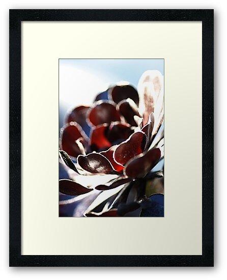 Succulent  in the Spotlight by Joy Watson