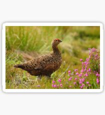 Famous Grouse Sticker