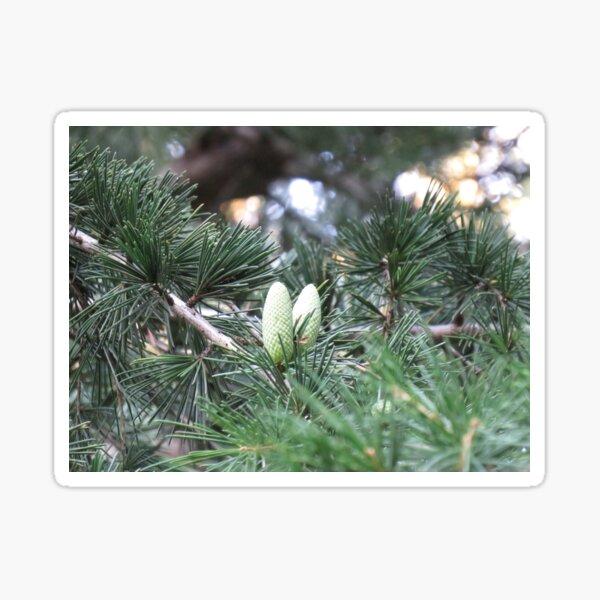 two little pinecones Sticker