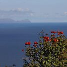 Across the Blue Atlantic by AnnDixon