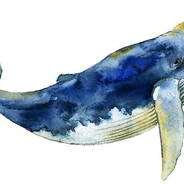 Blue Whale by kate-vigdis