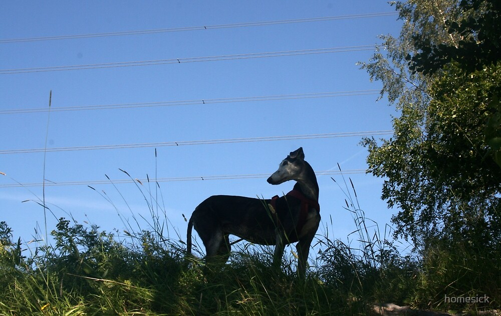 Lucy galgo at the river by homesick