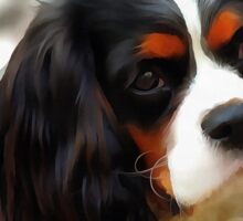 Portrait Of A King Charles Cavalier Spaniel Sticker