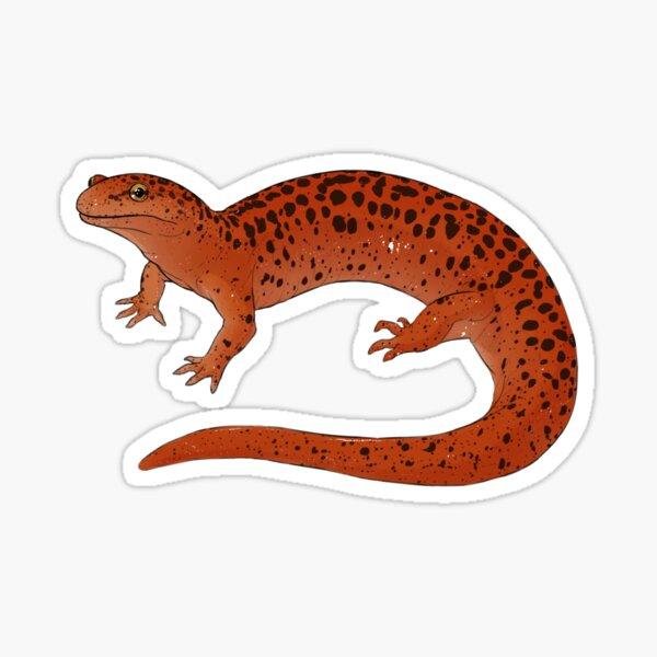 Red Salamander Sticker