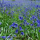 Bluebells 2016 by Tizz07