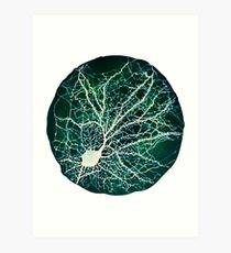 Dendritic tree and spines of an hippocampal neuron - Nebula Art Print