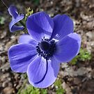 Beautiful blue color garden flower. by naturematters