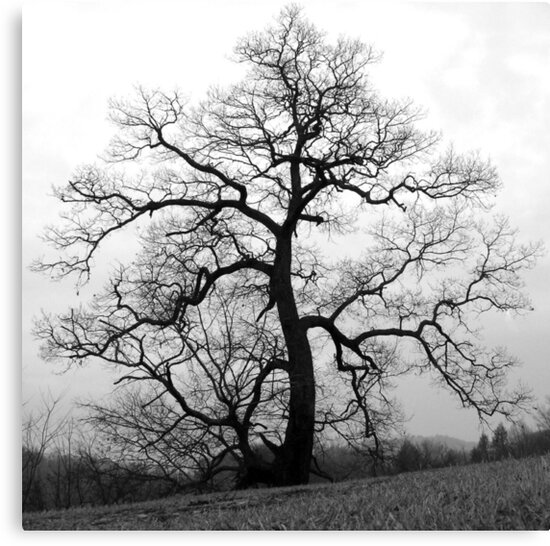 WINTER PRINCESS TREE by Jean Gregory  Evans