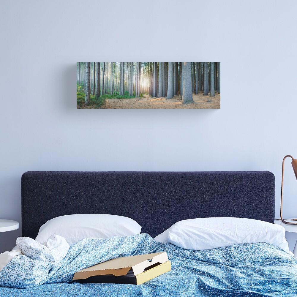 Sugar Pines, Laurel Hill, New South Wales, Australia Canvas Print