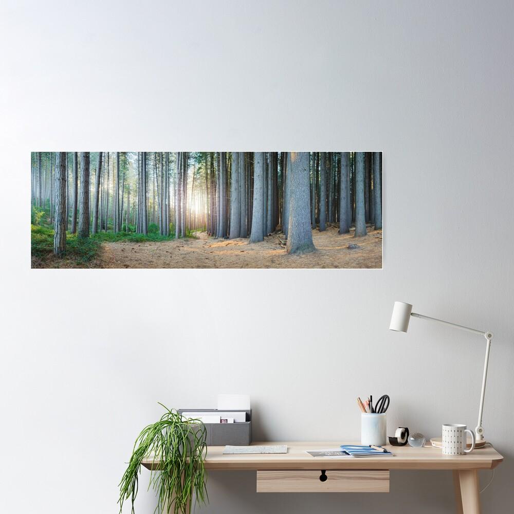 Sugar Pines, Laurel Hill, New South Wales, Australia Poster