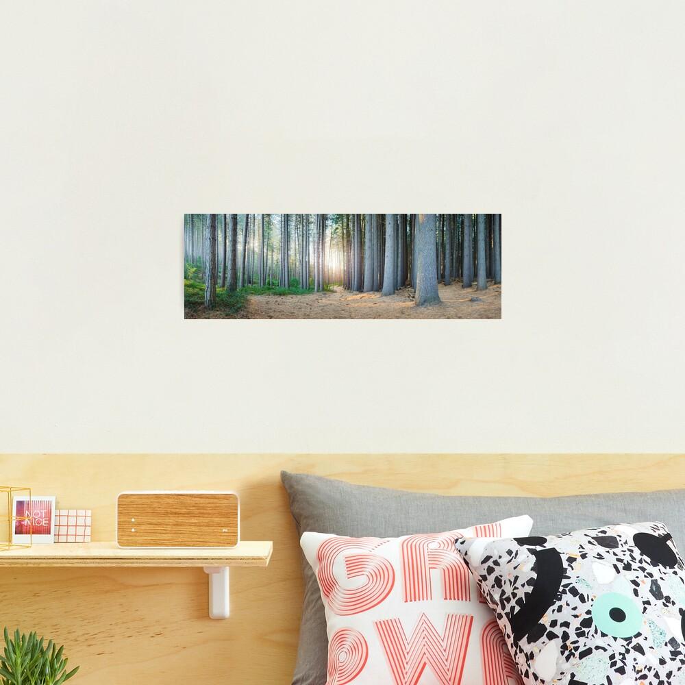 Sugar Pines, Laurel Hill, New South Wales, Australia Photographic Print