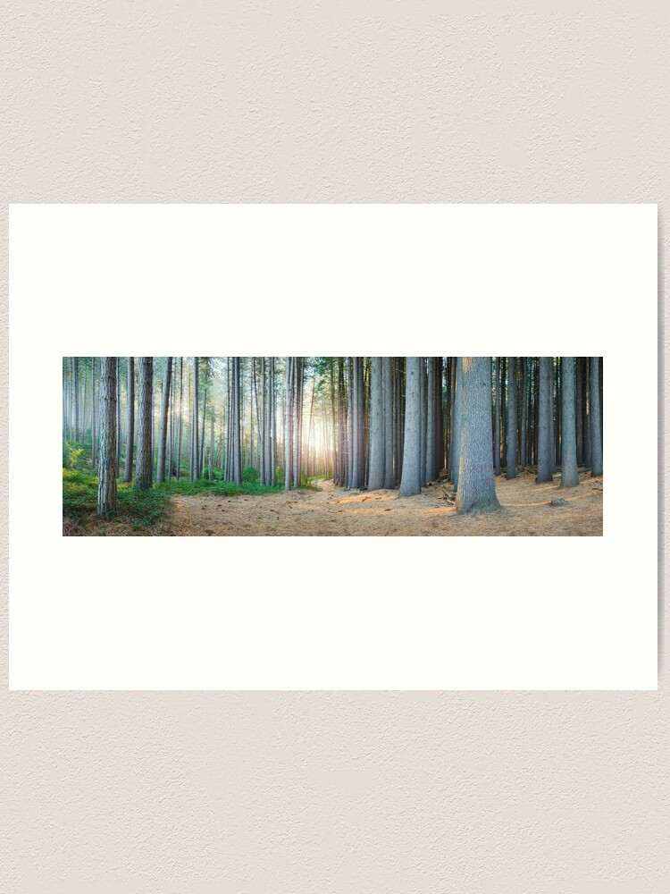 Alternate view of Sugar Pines, Laurel Hill, New South Wales, Australia Art Print