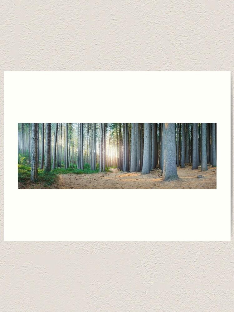 Alternate view of Sugar Pines, Laurel Hill, New South Wales, Australia Art Print