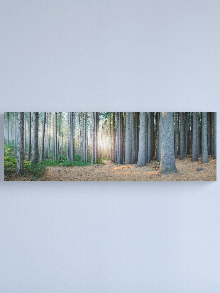 Alternate view of Sugar Pines, Laurel Hill, New South Wales, Australia Canvas Print