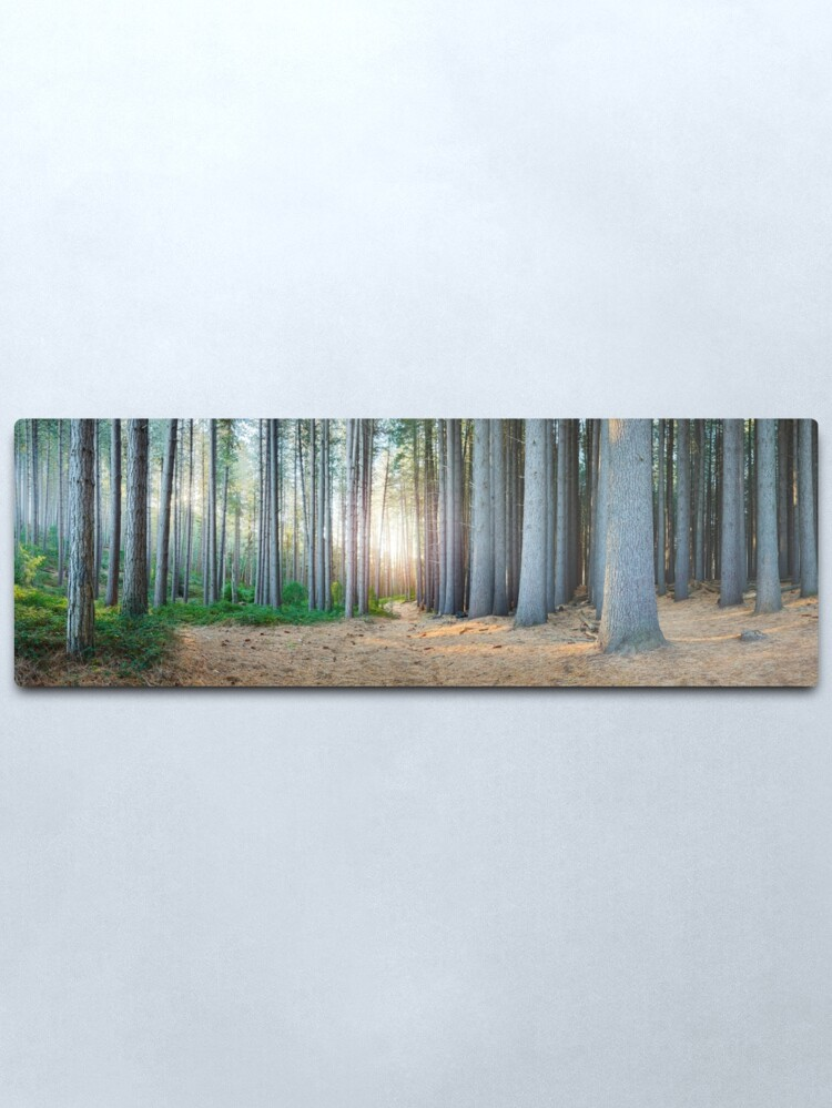 Alternate view of Sugar Pines, Laurel Hill, New South Wales, Australia Metal Print