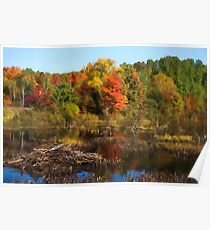 Autumn Beaver Pond Reflections Poster