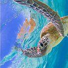 Elated turtle by Kara Murphy