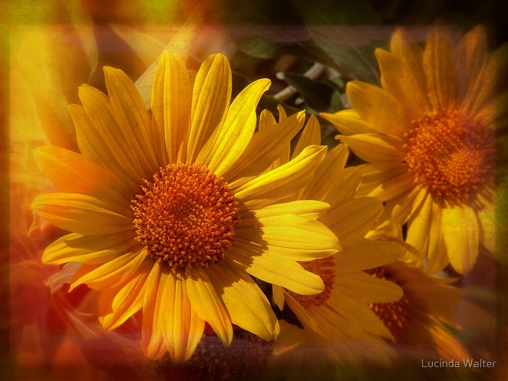 Just a Little Sunshine by Lucinda Walter