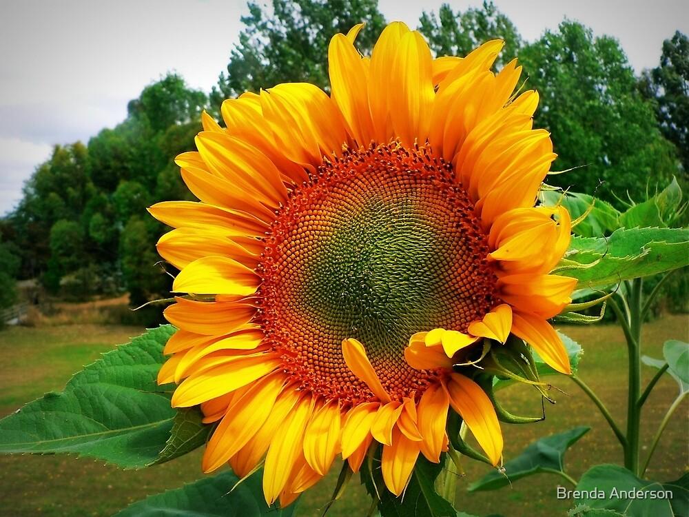 spreading sunshine by Brenda Anderson