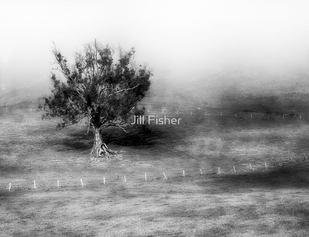 Tree in Early Morning Mist by Jill Fisher