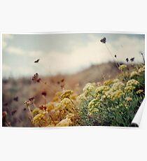 Wiese der Wildblumen Poster