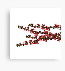 summer red flowers Canvas Print