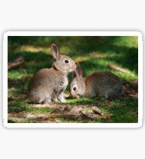 Baby Rabbits Sticker