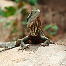 Eastern Water Dragon by CBoyle