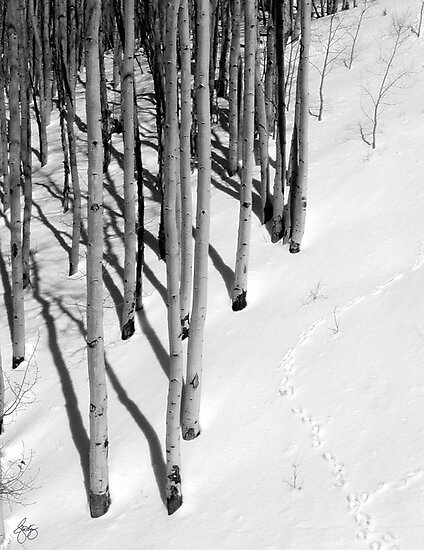 High Country Aspen by Wayne King