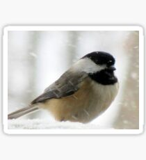 Chickadee In Snowstorm Sticker