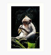 Baby Monkey Art Print