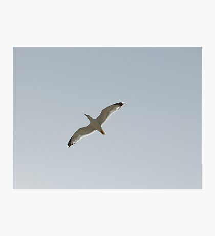 Flying Free Photographic Print