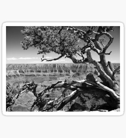 Tree Overlooking the Canyon Sticker