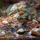 Sparkles in the Little Mountain Stream by Lucinda Walter