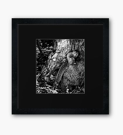squirrel and the tree king Framed Print