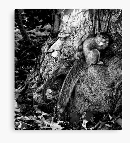 squirrel and the tree king Canvas Print