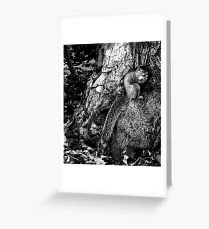 squirrel and the tree king Greeting Card