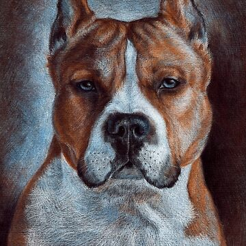 Amstaff by kate-vigdis