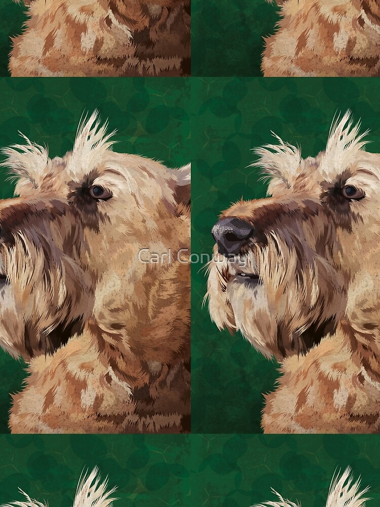 Irish terrier by cjnconway