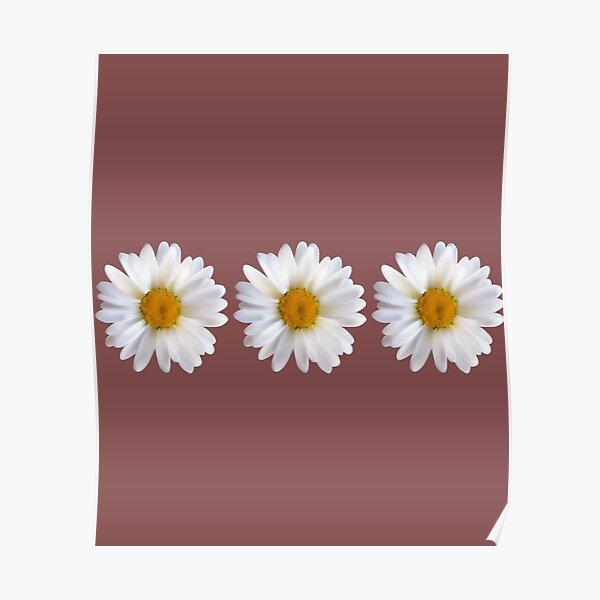 white chamomile flowers sticker Poster
