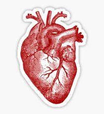 Vintage Herz Anatomie Sticker