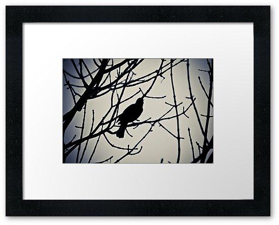 Bird by Jen Wahl